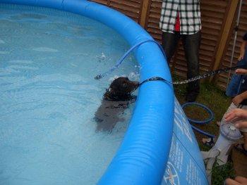 スココ泳ぐ2