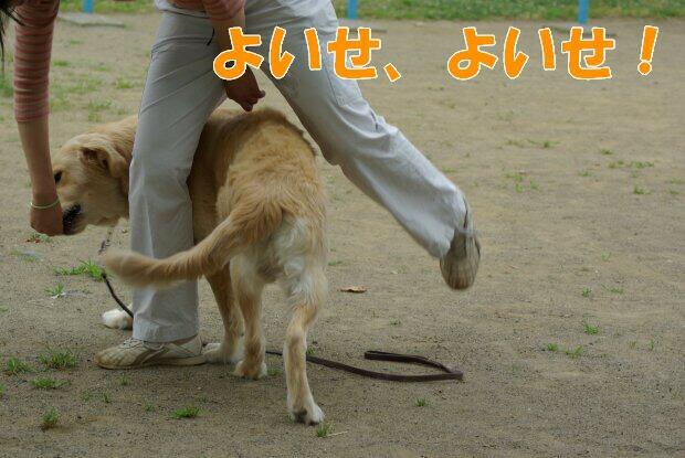 くま_くぐって2