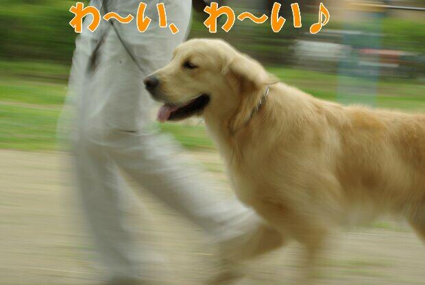 くま_走る