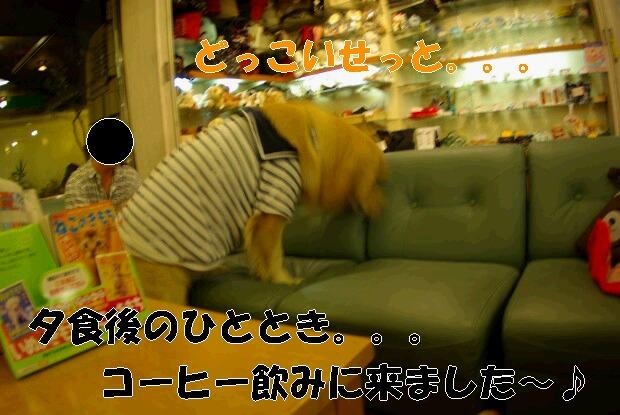 09夕食後_くま1