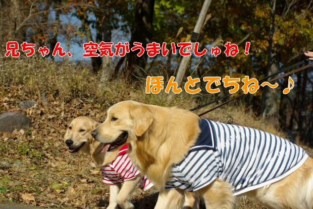 03お散歩