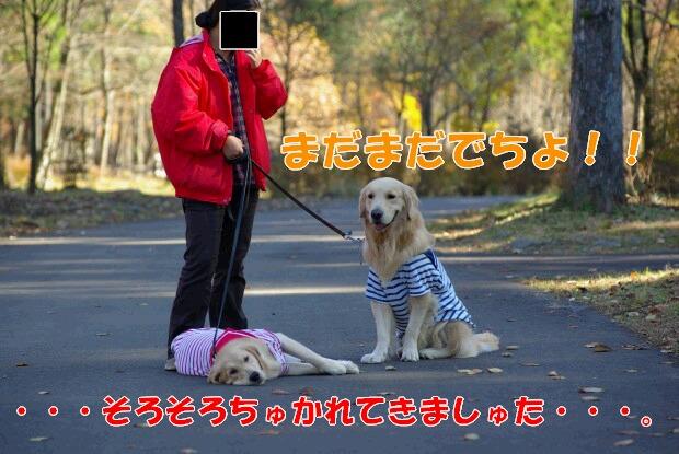 04お散歩