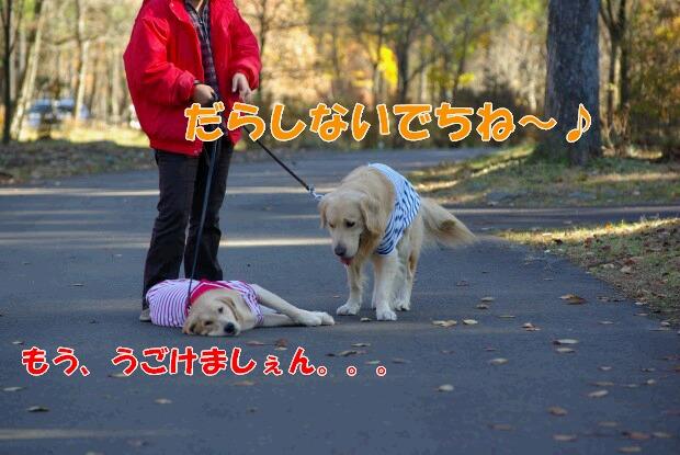05お散歩