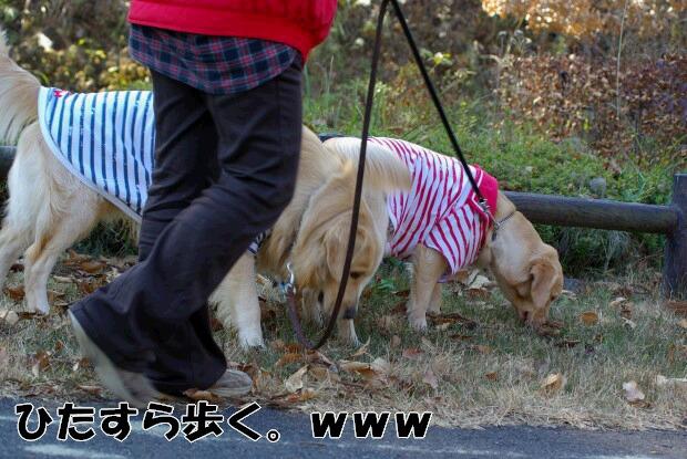 06お散歩