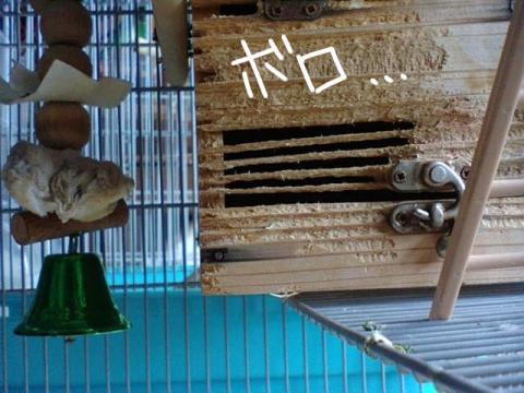 090927subako-_20090927150803.jpg