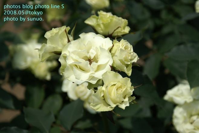 DSC02122.jpg