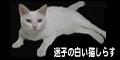 《迷子の白い猫しらす》へ