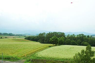 美瑛の丘で凧揚げ