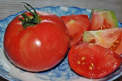 トマト、ようやく初物