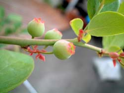 bberry07.jpg