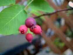 jberry07.jpg