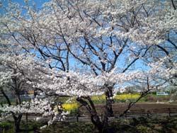 takenoko04.jpg