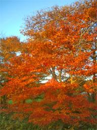 紅葉がきれいでした!