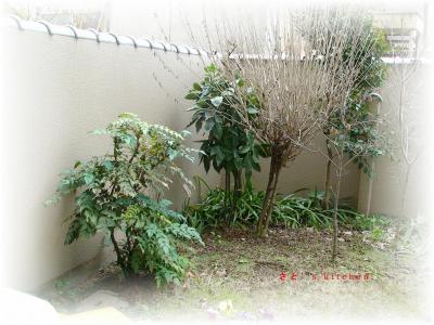 冬の庭です