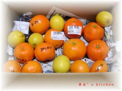 小太郎さんセレクト柑橘類