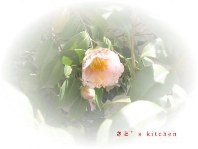 なんというお花でしょう