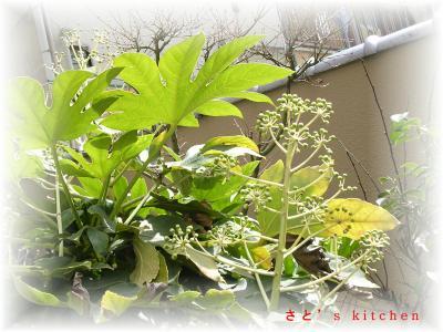 庭の木@今からどんな花が咲くの?