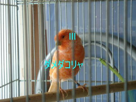 繧医b・胆convert_20090720121543