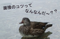 bloghasebe.jpg