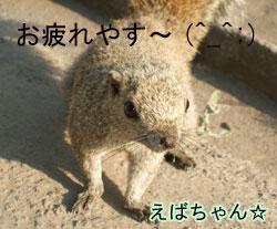 ebashi.jpg
