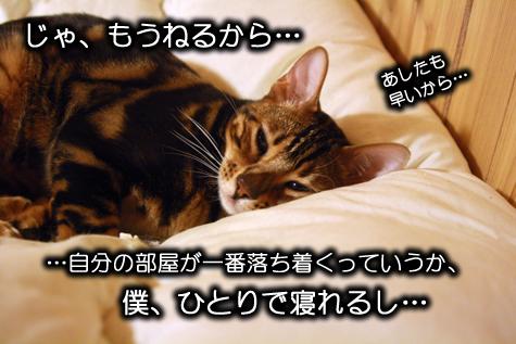 一緒に寝ようよ…