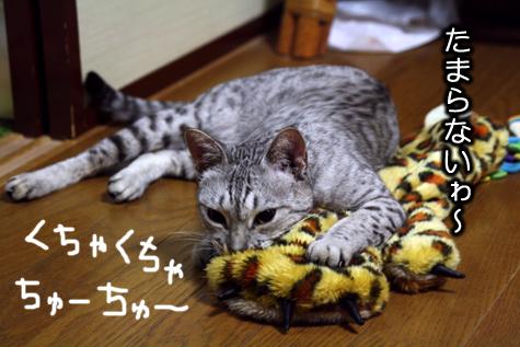 保護猫もも2