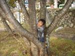 拓ちゃんと木