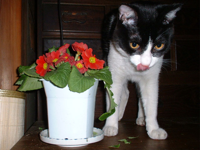 お花食べちゃったゆめちゃんにゃ