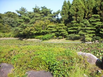 060923_2_12_garden.jpg