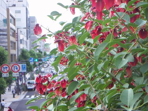 080616_sanpo_7.jpg