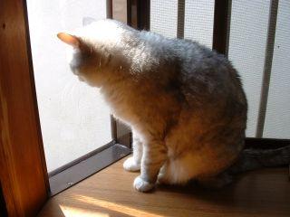 20050417_cat1