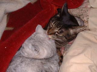 20050425_cat1