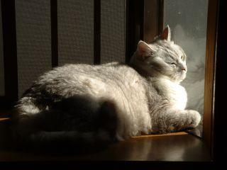 20050425_cat2