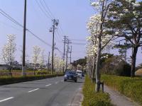 mokuren1.jpg