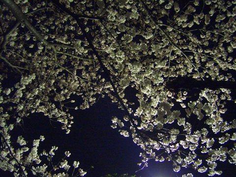 080329001.jpg