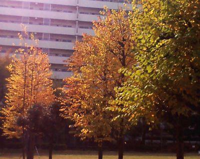 色づく公園 2