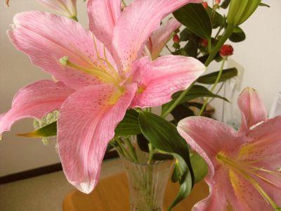 おめでとうのユリの花