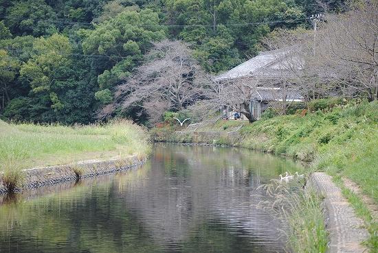 近所の川2