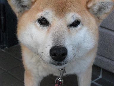 我が愛犬~