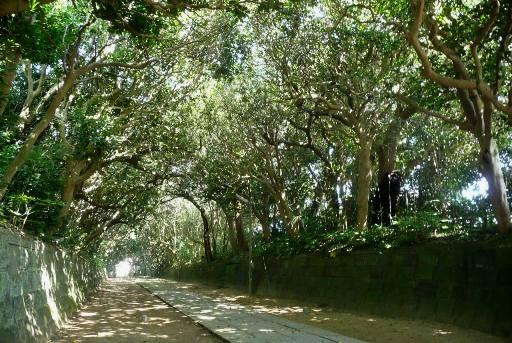 酒列磯崎神社の樹叢