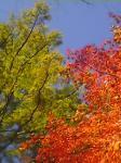 紅葉真っ盛りの奥日光にて♪