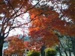 京都に来たって感じがしますね^^