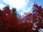 天龍寺の紅葉その2