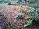 紅葉のじゅうたん♪