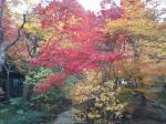 色とりどりの紅葉♪