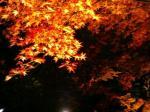 夜の清水寺その8