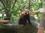 エサを食べるレッサーパンダ♪