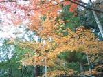 色鮮やかな紅葉♪
