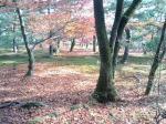 紅葉のじゅうたんその2です♪