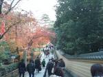 石段の両側に連なる楓の木々☆